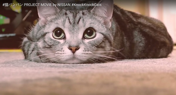 nissan-reminds-us-to-check-for-sleeping-cats-before-starting-the-engine-104848_1
